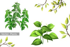 Plants and Leaves. Vector