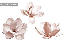 Set of Magnolia Flowers. Vector