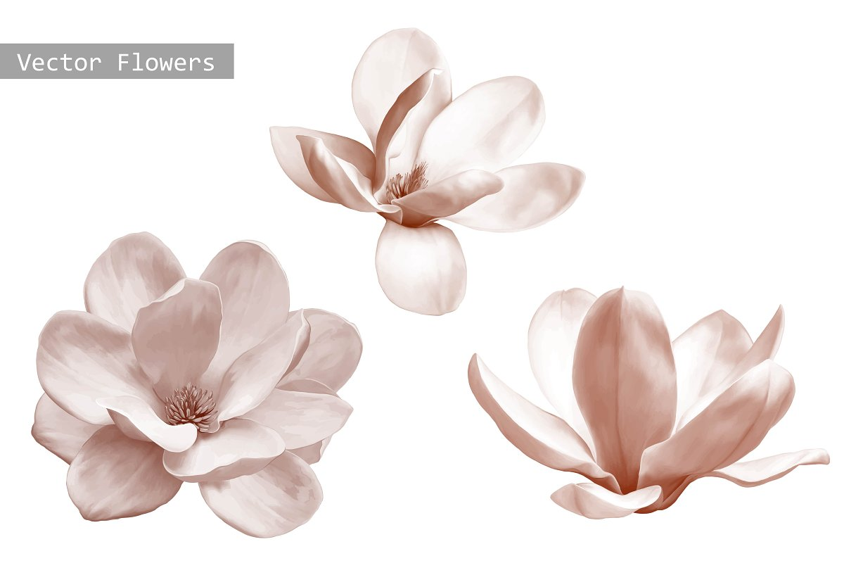 Set Of Magnolia Flowers Vector Graphic Objects Creative Market