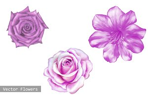 Set of Pink Rose Flowers