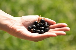 handful of ripe blackberries