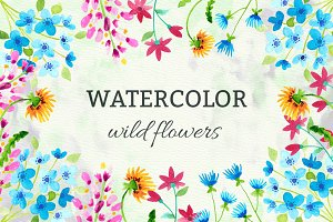 Watercolor Wild Flowers