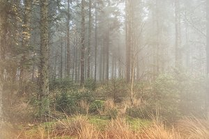 Misty forest with sunshine