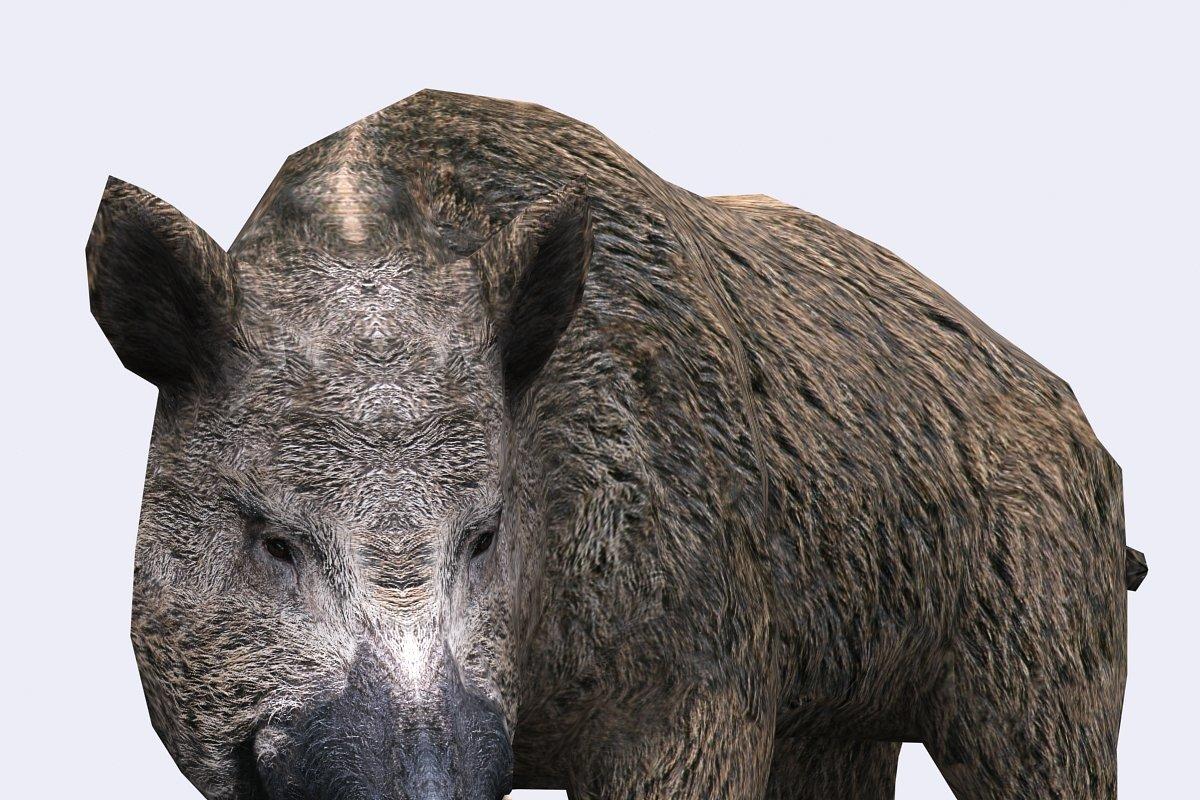 3DRT - Wild animals