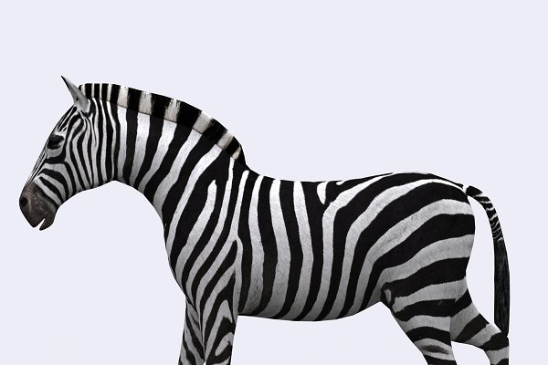 3DRT - Safari animals -Zebra