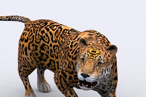 3DRT - Safari animals - Jaguar