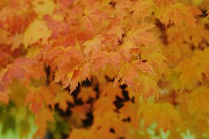 Autumn Leaves - Stock Photography