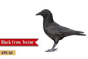 Crow. Side view. Vector