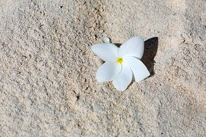 white flower on a coral sand beach