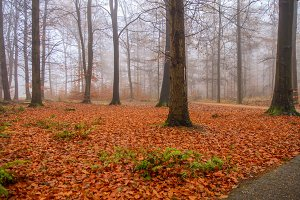 Fall foliage in foggy forest