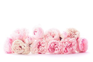 Pink roses border