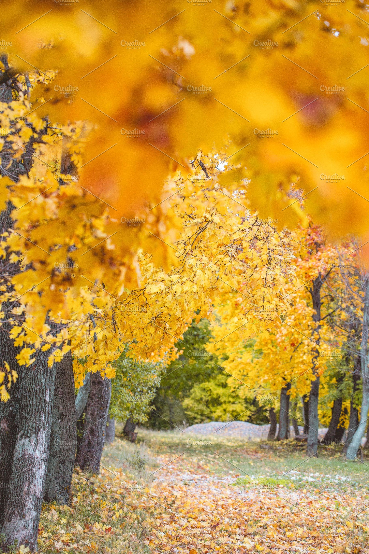 Autumn Landscape High Quality Stock Photos Creative Market