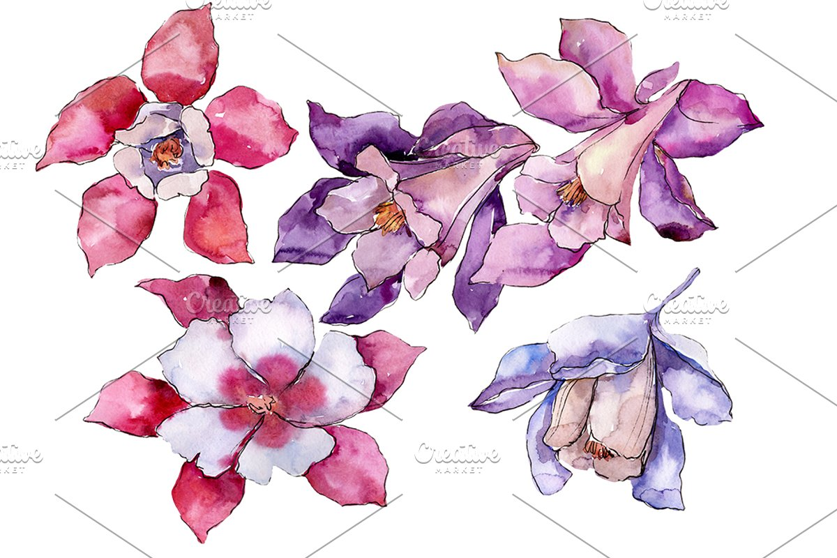 Aquilegia red flower Watercolor png