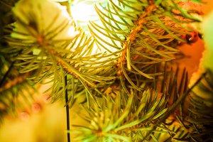 Outdoor chrismas tree