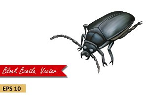 Black Beetle. Vector