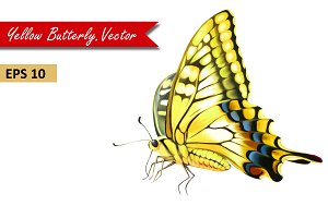 Yellow Butterfly. Vector