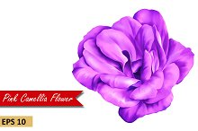 Purple Camellia Rose. Vector