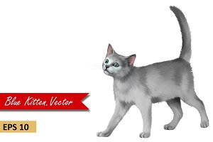 Gray Kitten. Vector