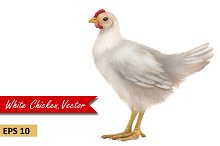 Young White Chicken. Vector
