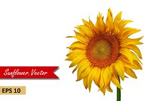 Beautiful Sunflower. Vector