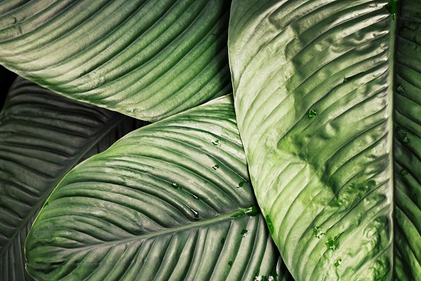 Tropical Jungle Leaf Background High Quality Nature Stock Photos Creative Market Download transparent jungle leaves png for free on pngkey.com. tropical jungle leaf background