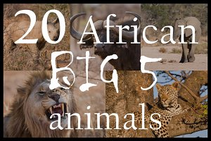 Big 5 Africa wild animals | Pack #1