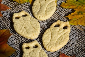 Owl cookie