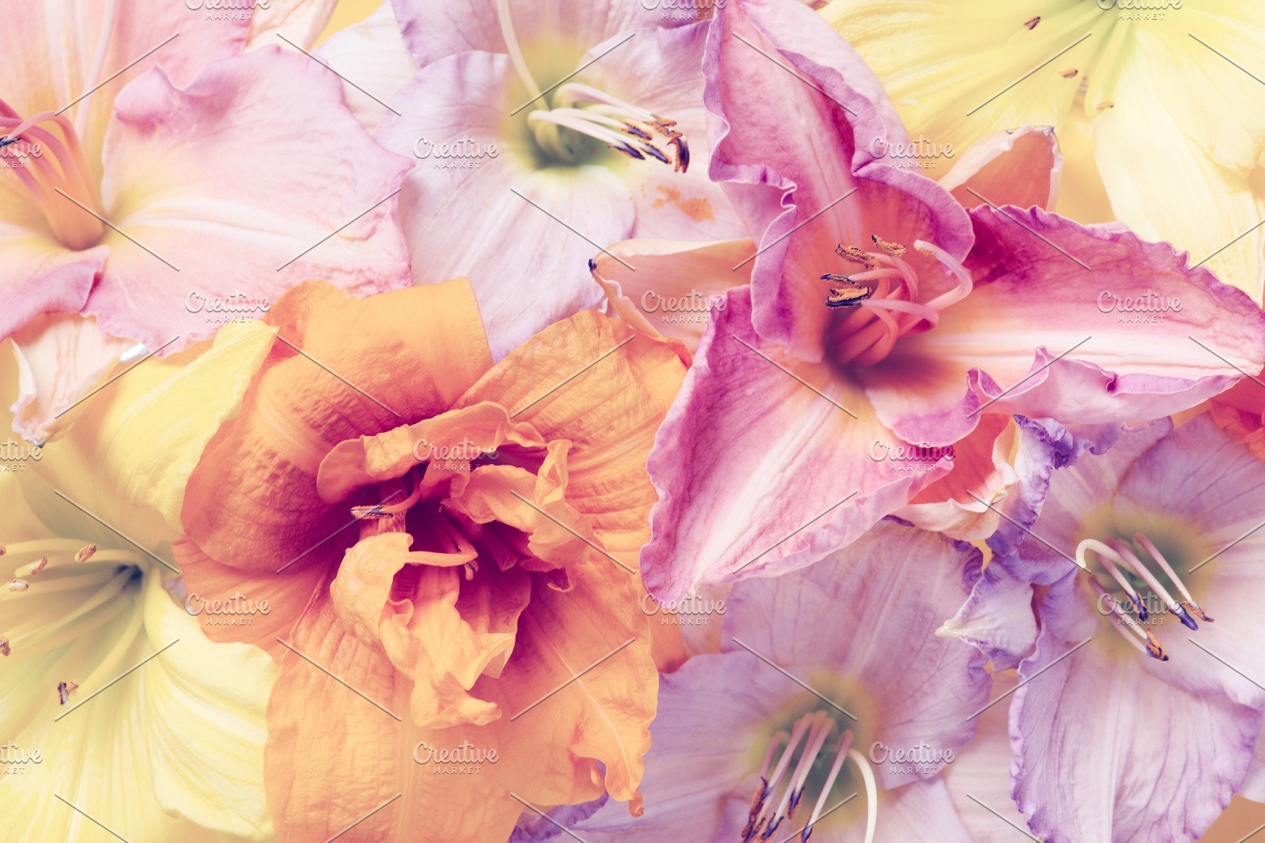 Tender Pastel Floral Background High Quality Nature Stock Photos