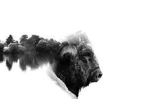 aurochs with double exposure effect