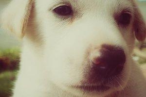 cute puppy in retro filter effect