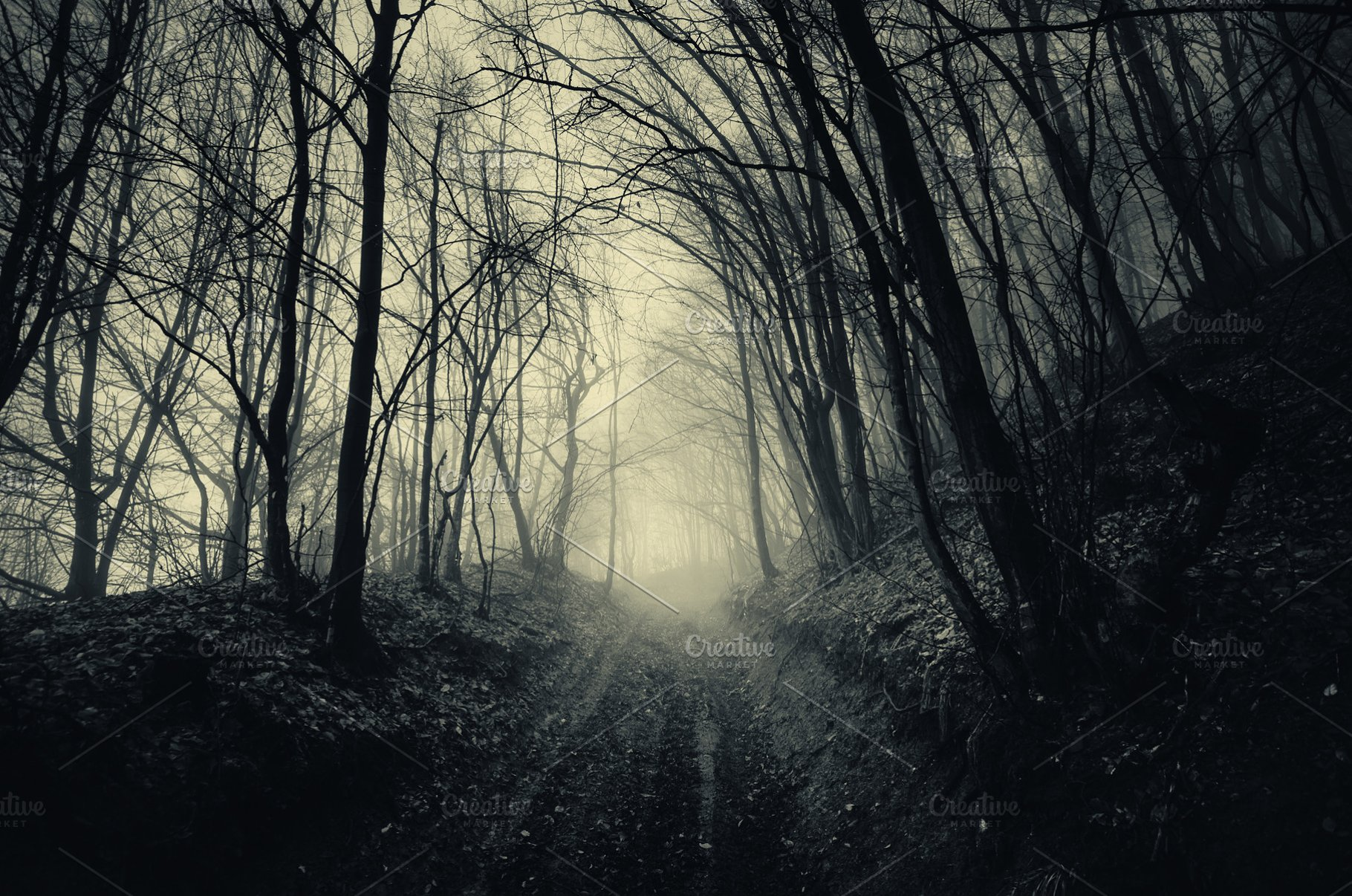 Path Through Haunted Dark Forest
