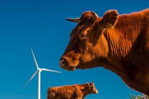 Livestock and energy II