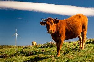 Livestock and energy III