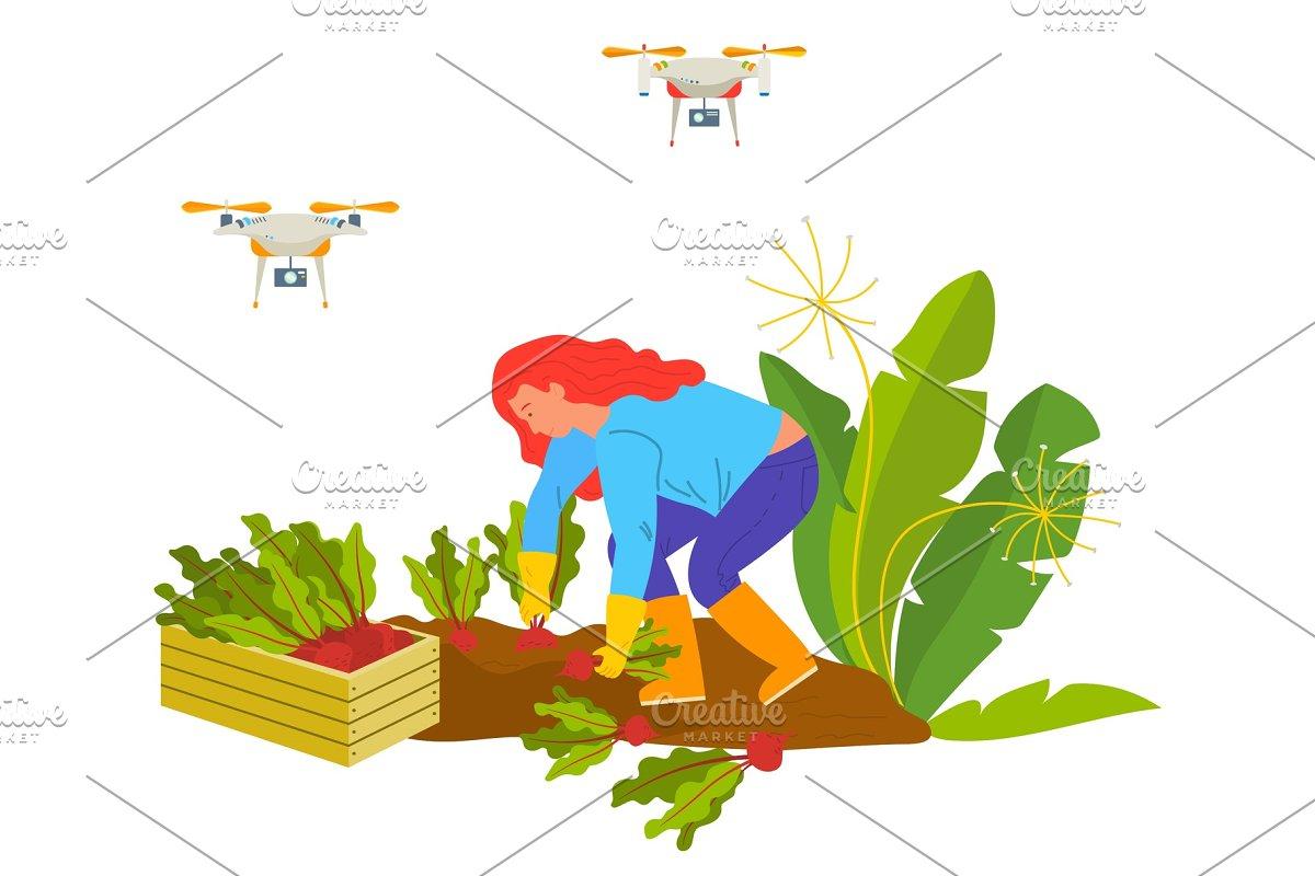 Harvesting Beet, Drone on Farm
