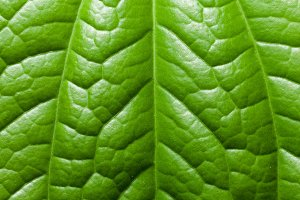 leaf background.