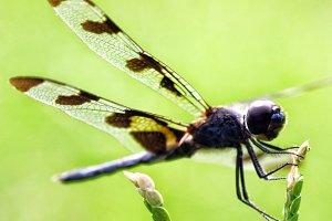 Dragonfly Stopover
