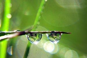 Dewdrop Lensflare