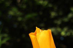 Orange flower bud