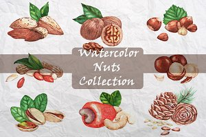 Watercolor nuts collection