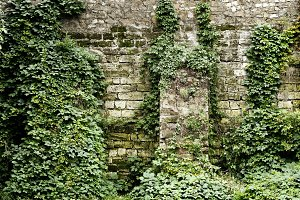 Stone wall overgrown with ivy