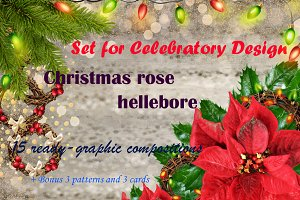 Composition of the Christmas rose