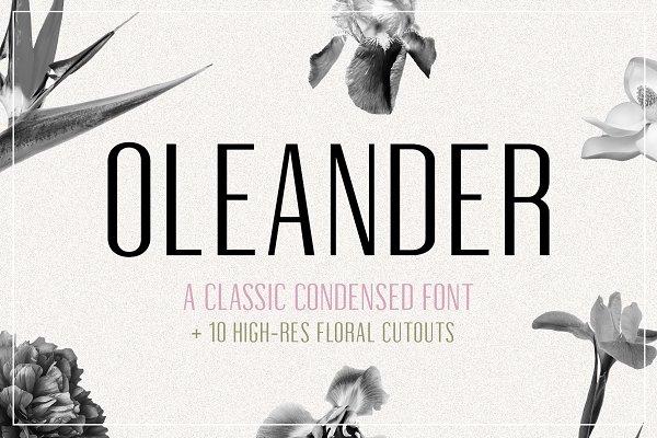 Oleander | Sans-Serif + 10 Cutouts