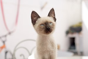 Beautiful domestic animal house cat