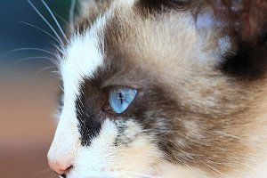 Portrait of the beautiful blue eyes