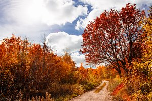 Beautiful autumn landscape on a back