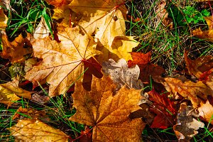 Background of colorful autumn leaves