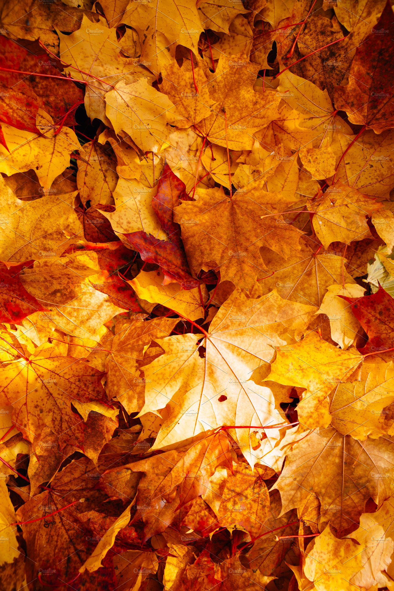 Background Of Colorful Autumn Leaves Nature Photos