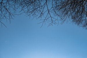 Winter Branches and Blue Sky