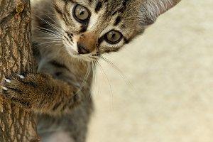 Puppy cat climb