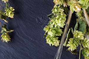 Beer Green hop branches